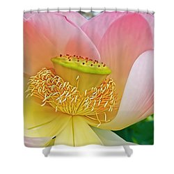 Pink Lotus Lily Shower Curtain