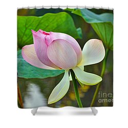 Pink Lotus Shower Curtain by Savannah Gibbs