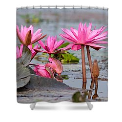 Pink Lotuses Shower Curtain by Fotosas Photography