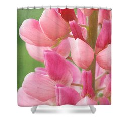 Pink Lupine 974 Shower Curtain
