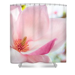 Pink Magnolia Shower Curtain by Denise Bird