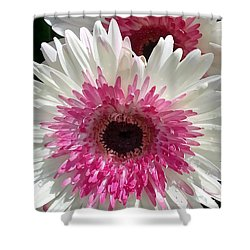 Pink N White Gerber Daisy Shower Curtain by Sami Martin