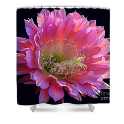 Pink Night Blooming Cactus Flower Shower Curtain