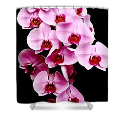 Pink Orchid Shower Curtain by Menachem Ganon