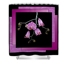 Shower Curtain featuring the photograph Framed Orchid Spray by Patti Deters
