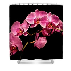 Pink Orchids 3 Shower Curtain