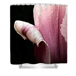 Shower Curtain featuring the photograph Pink Pearl Petals by Nadalyn Larsen