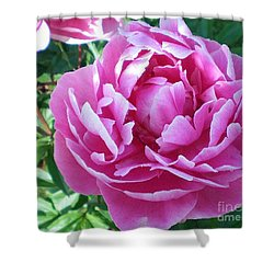 Pink Peony Shower Curtain by Barbara Griffin