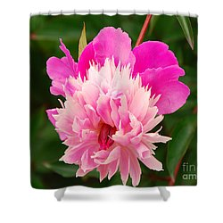 Pink Peony Shower Curtain by Mary Carol Story