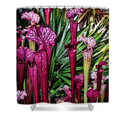 Pink Pitcher Plants Shower Curtain by Colleen Kammerer