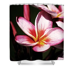 Shower Curtain featuring the photograph Pink Plumeria by Angela DeFrias