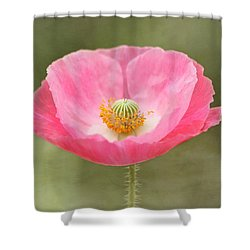 Pink Poppy Flower Shower Curtain by Kim Hojnacki