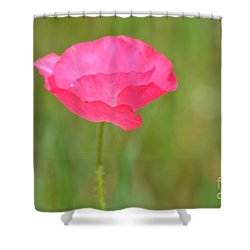 Pink Poppy Shower Curtain by P S
