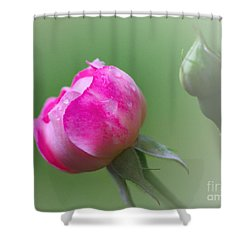 Pink Rose And Raindrops Shower Curtain