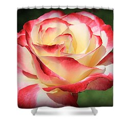 Shower Curtain featuring the photograph Pink Rose by Athala Carole Bruckner