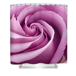 Pink Rose Folded To Perfection Shower Curtain