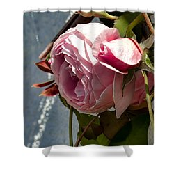 Shower Curtain featuring the photograph Pink Rose In Half Profile.2014 by Leif Sohlman