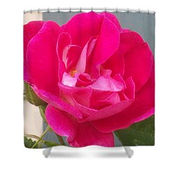 Pink Rose Shower Curtain by Jewel Hengen