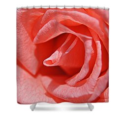 Pink Rose Shower Curtain by Kathy Churchman