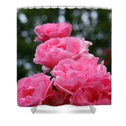Shower Curtain featuring the photograph Pink Roses At Sunset by Vadim Levin