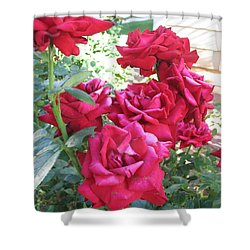 Pink Roses Shower Curtain by Chrisann Ellis