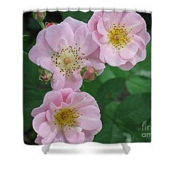 Pink Roses Shower Curtain by HEVi FineArt