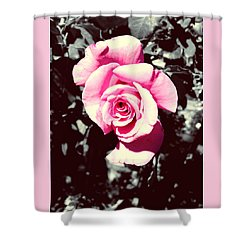 Pink Rosetta  Shower Curtain by Sherry Flaker