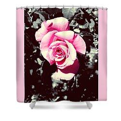 Pink Rosetta  Shower Curtain