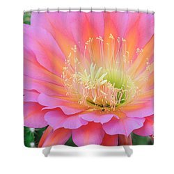 Pink Saucer Shower Curtain