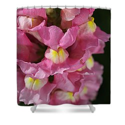 Pink Snapdragon Flowers Shower Curtain by Joy Watson