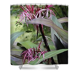 Pink Spider Lily Crinum Shower Curtain by Venetia Featherstone-Witty