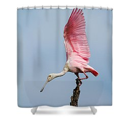 Pink Spoonbill Ready For Takeoff Shower Curtain by Bill Swindaman