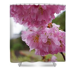 Pink Spring Tree Blossoms Art Prints Shower Curtain by Baslee Troutman