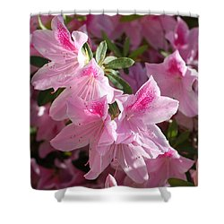 Pink Star Azaleas In Full Bloom Shower Curtain