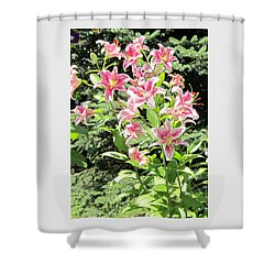 Pink Stargazer Lilies-greeting Card Shower Curtain