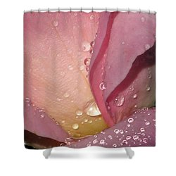 Pink Tea Rose 02 Shower Curtain