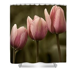 Pink Trio Shower Curtain by Sonya Lang