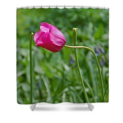 Shower Curtain featuring the photograph Pink Tulip by Aimee L Maher Photography and Art Visit ALMGallerydotcom