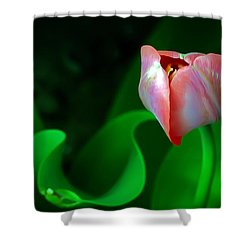 Pink Tulip Shower Curtain by Brian Wallace