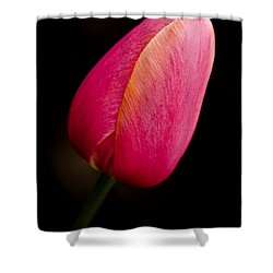 Pink Tulip Shower Curtain by Dee Cresswell