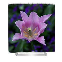Pink Tulip Flower With A Spot Of Green Fine Art Floral Photography Print Shower Curtain by Jerry Cowart