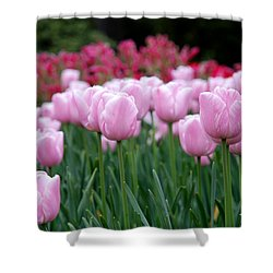 Pink Tulip Garden Shower Curtain by Jennifer Ancker