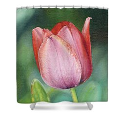 Pink Tulip Shower Curtain by Joshua Martin