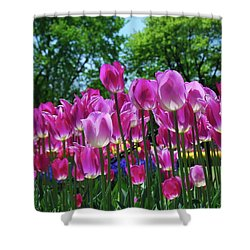 Shower Curtain featuring the photograph Pink Tulips by Allen Beatty