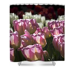 Pink Tulips Shower Curtain