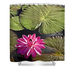 Pink Water Lily II Shower Curtain by Heiko Koehrer-Wagner