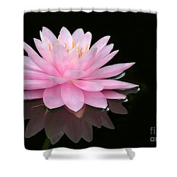Pink Water Lily In A Dark Pond Shower Curtain