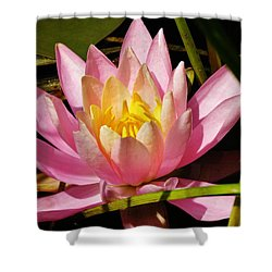 Pink Water Lily Shower Curtain by Sherman Perry