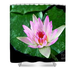 Shower Curtain featuring the photograph Pink Waterlily Flower by David Lawson