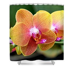 Pink Yellow Orchid Shower Curtain by Rona Black